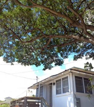 コドモハワイ | LLLLIFE,INC.